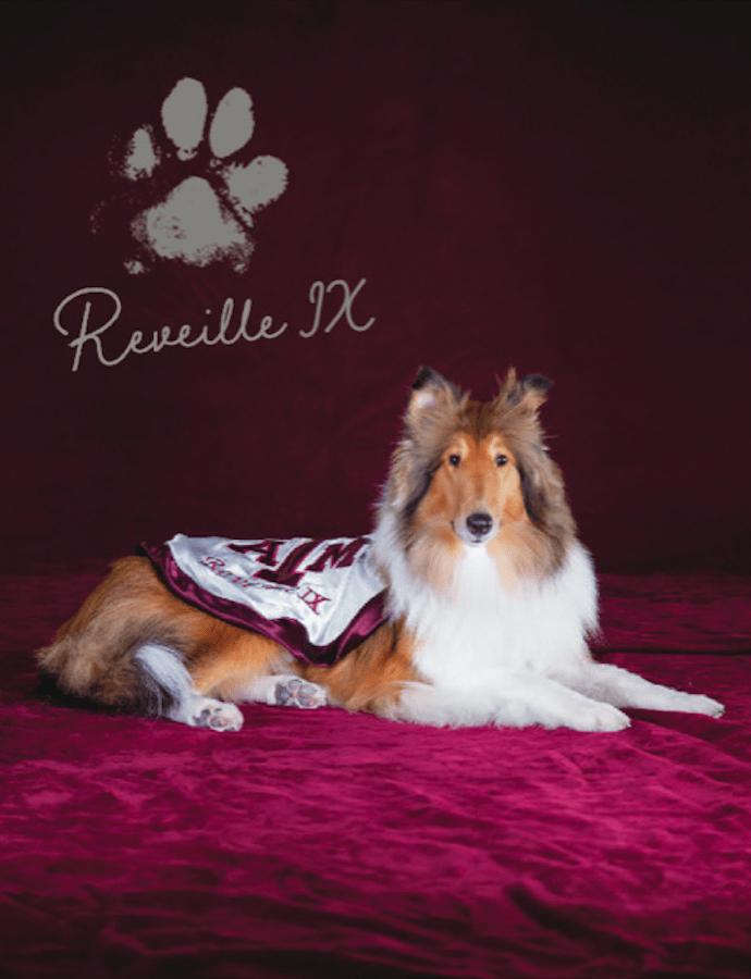 Meet Miss Reveille